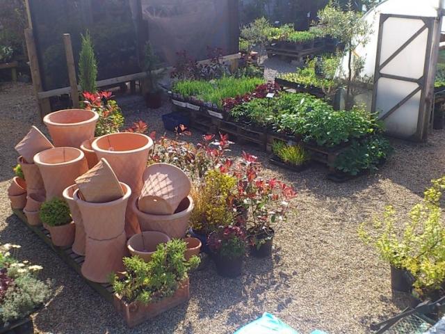 garden-nursery