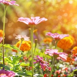 Plants & Planting