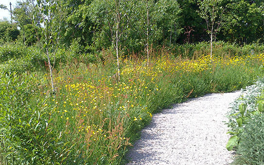 Wildflower garden path